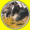Tierfutter